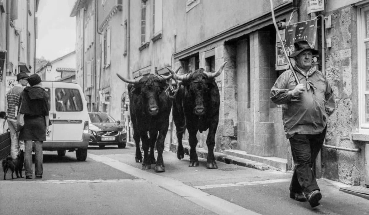 Jan s Terezou kravovina